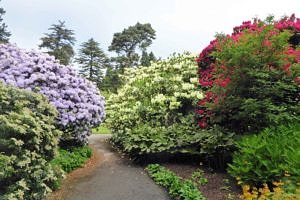 Rhododendron Glades in Springtime