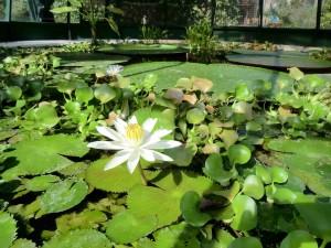 Zagreb Botanical Gardens