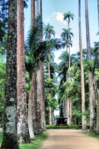 Avenue of Royal Palms