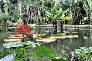 Ornamental lake with Victoria lilies