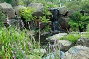 Australian National Botanic Gardens -Gullies provide attractive features