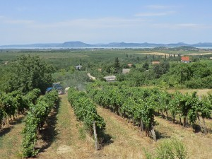 Vineyards on the Balaton southern shore