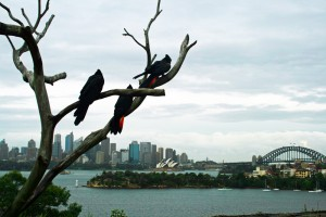 View from Taronga Zoo, Sydney