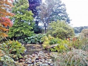 Birmingham Botanical Gardens - Rock garden pool