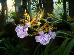 Real Jardin Botanico - Orchid display