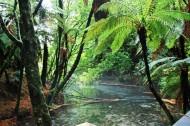 Hamurana Springs Reserve