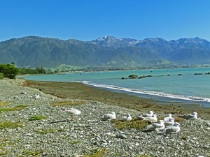World Ravel - Kaikoura Beach, New Zealand South Island