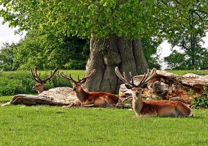 Relaxing in the Deer Park