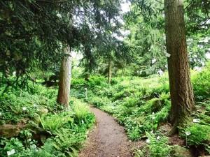 Fern Ravine - Botanic Garden