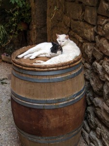 Two cats in Aigne