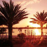 Winter Sun - Orlando Florida