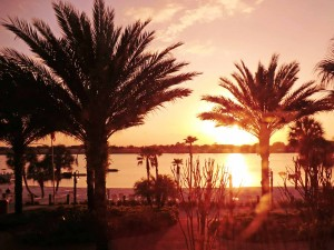 Winter Sun - Orlando Florida