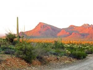 Saguaro National Park West - Tucson Mountain District