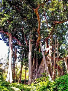 Liana Trees in the Botanical Garden