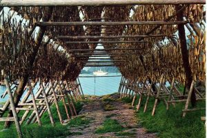 Stockfish on drying racks