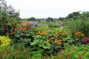 Killerton Gardens