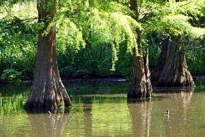 Small lake had a 'primeval' feel