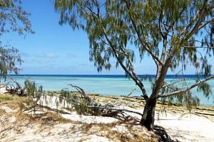Tropical: Great Barrier Reef Musgrave