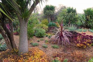 Exotic Plants in Felbrigg Walled Garden