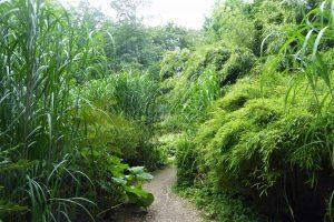Harewood: Pathway through the Himalayan Garden