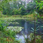 Cornwall: Pencarrow House Lake Walk